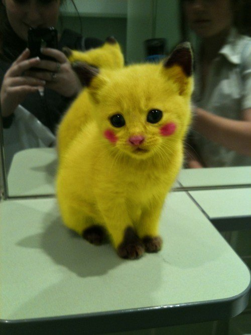 Pokémon pikachu cat