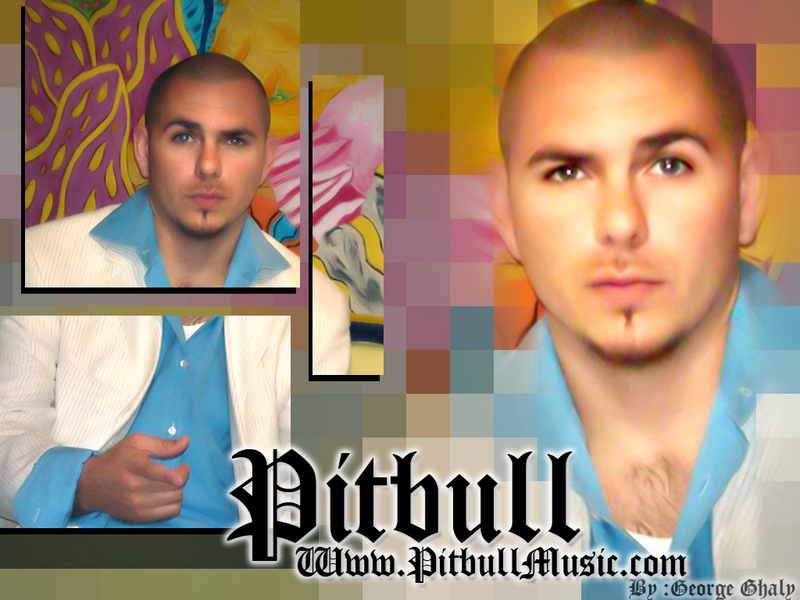 pitbull wallpaper. 305 - Pitbull Wallpaper