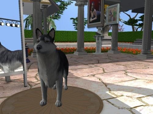 The Sims 2 A & O