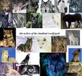 the anubian's wolf pack - the-anubians-wolf-pack photo