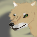 this is an awsom pic of a dingo named takey - fire-and-ice-the-wolf-pack fan art