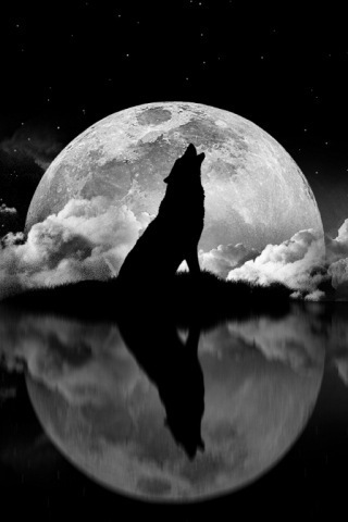 Wolves and Werewolfs wallpaper entitled wolf
