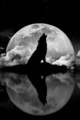 wolf - wolves-and-werewolfs photo