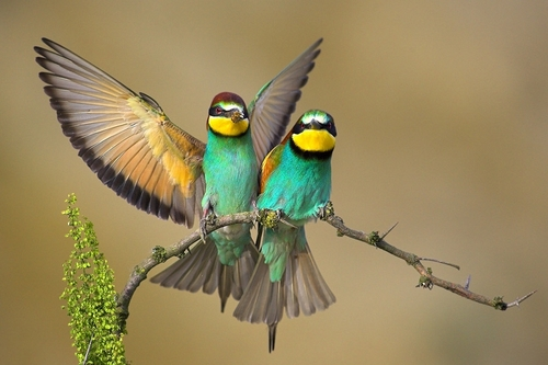 Beautifuls Birds