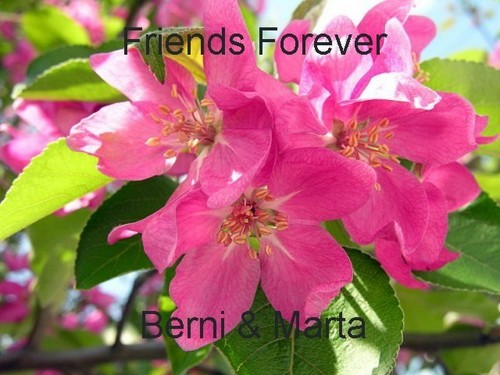 For my Friend:*:*:*:*