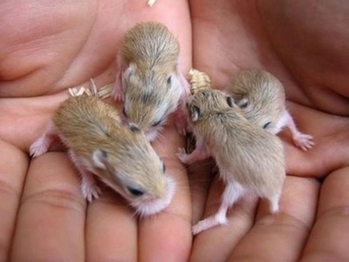 God&#39;s little ones <3