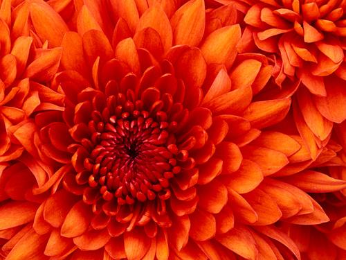 aléatoire Prittey fleur
