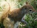 Squabbit