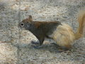 Squabbit - squirrels photo
