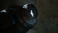 Three-Eyed Crow - game-of-thrones photo