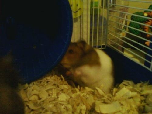my hamster ANGLE