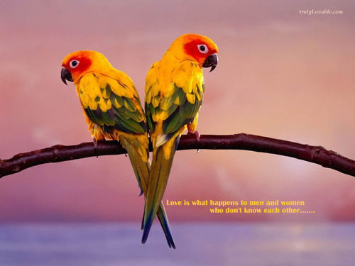 Gambar cantik kertas dinding probably containing an amazon, a parakeet, and a lovebird titled Beautiful Pictures ^_^