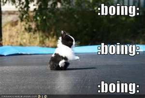 LOLbunnies-bunny-rabbits-21970819-300-202.jpg