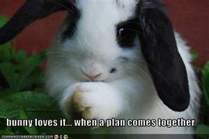 LOLbunnies - bunny-rabbits Photo