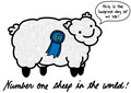 annual sheep contest