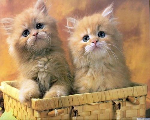 ^_^ cats - cats Wallpaper