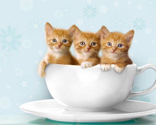 Cats wallpaper probably containing a coffee break, a turkish coffee, and a demitasse titled ^_^ cats