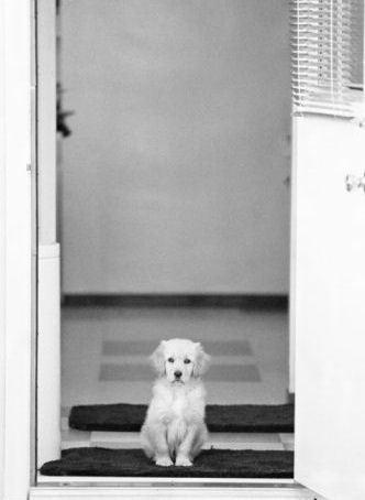 Cute chó con ❤