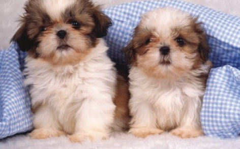 Cute Puppies ❤