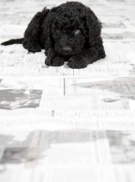 Cute Puppies ❤