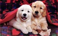 Cute cachorrinhos :)