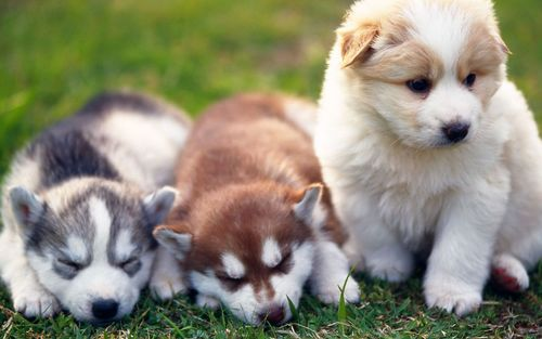 Puppies wallpaper titled Cute Puppies :)