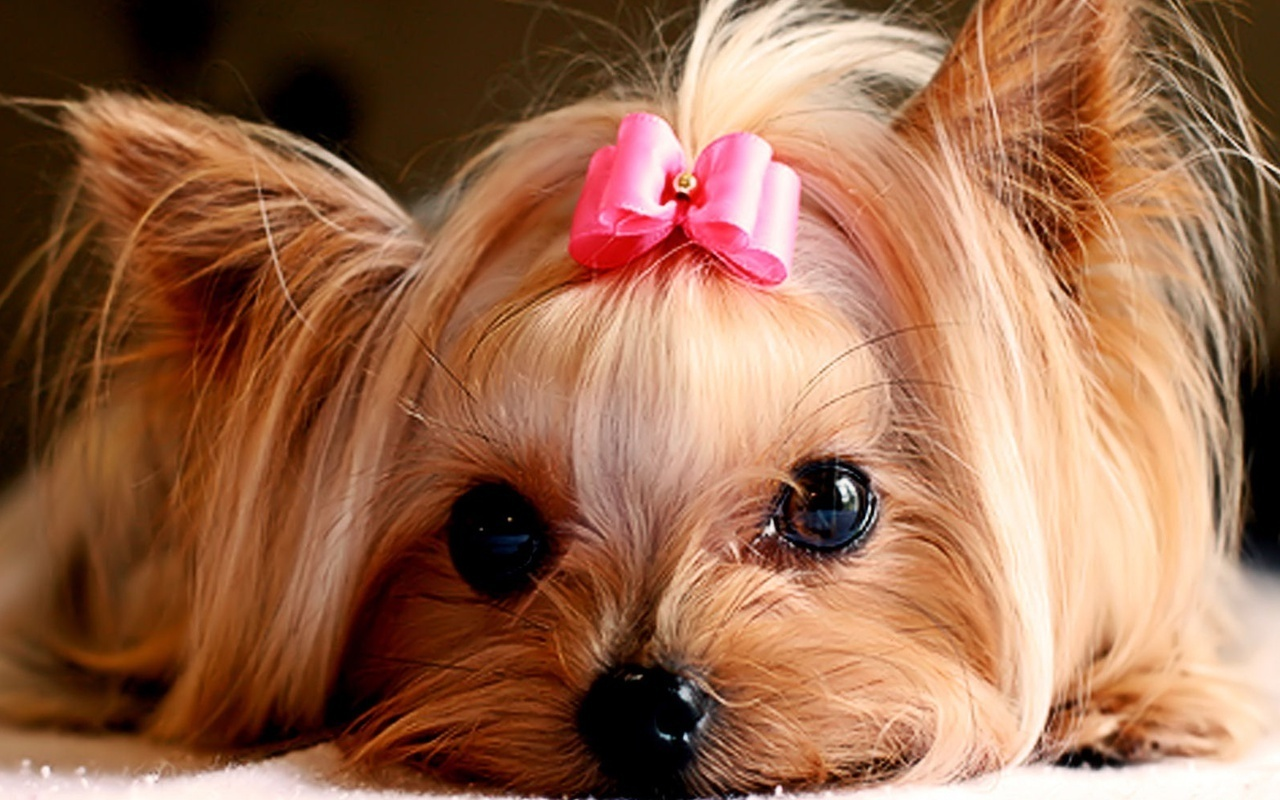 cute puppies puppies wallpaper 22040893 fanpop