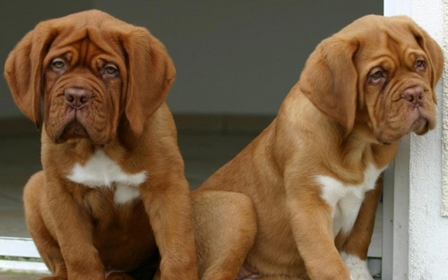 Cute chiots :)