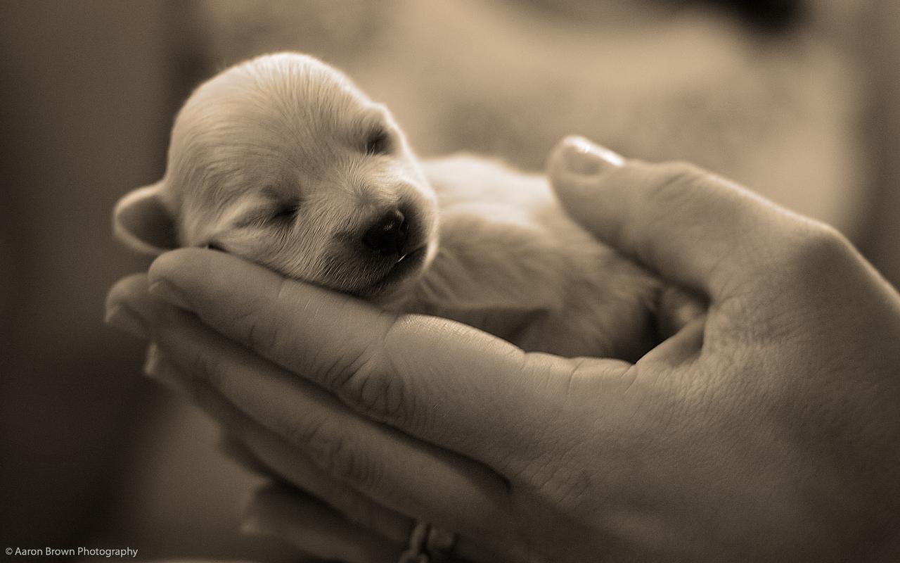 Cute Welpen :)