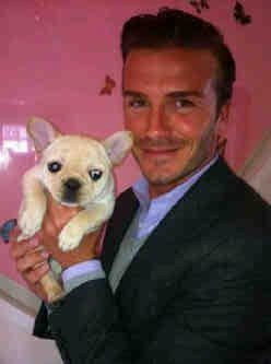 Photo of David Beckham & his  Dog Scarlet