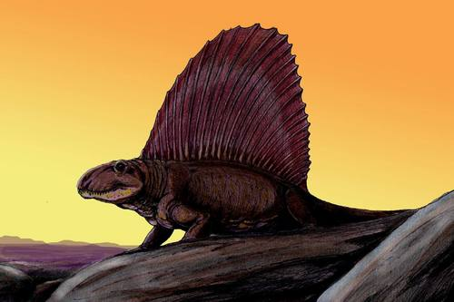 Dinosaurs wallpaper with a triceratops titled Dimetrodon