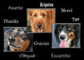 Dogs From All Over The World Want To Thank You Frances,For Your Help And Kindness <3