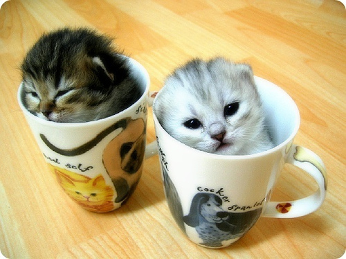 Cats wallpaper with a coffee break titled Kitties!