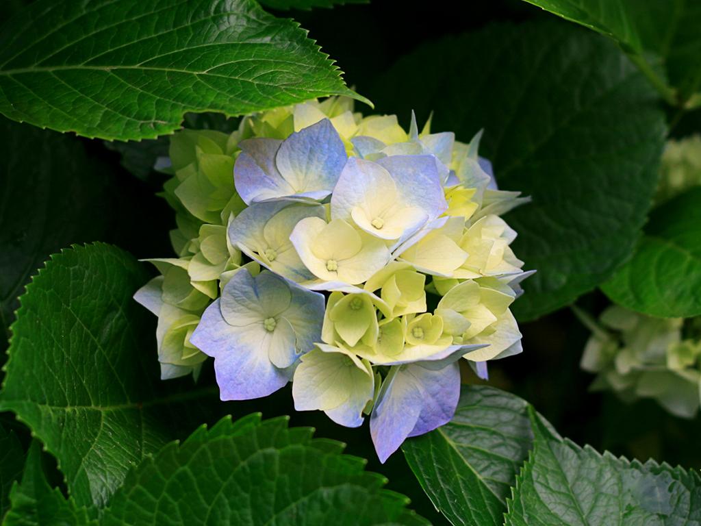 My pretty pretty flor