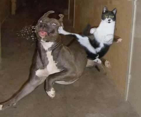 Ninja cat kickng dog butt