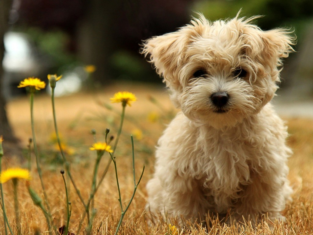 Animals And Pets Images Pets Hd Wallpaper And Background