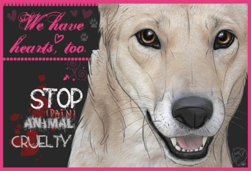 Against Animal Cruelty! 바탕화면 entitled STOP Animal Cruely :(