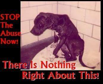 Against Animal Cruelty! 바탕화면 possibly with 아니메 entitled STOP THIS....PLEASE !!!