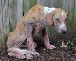 Against Animal Cruelty! wallpaper entitled STOP THIS....PLEASE !!!