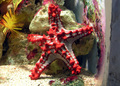 Starfish - starfish photo