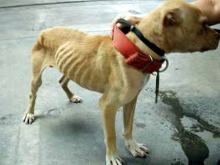 Against Animal Cruelty! wallpaper entitled This Must Be Stopped :(