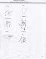 how to draw winx club