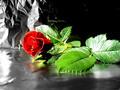 aleatório fotografias :)