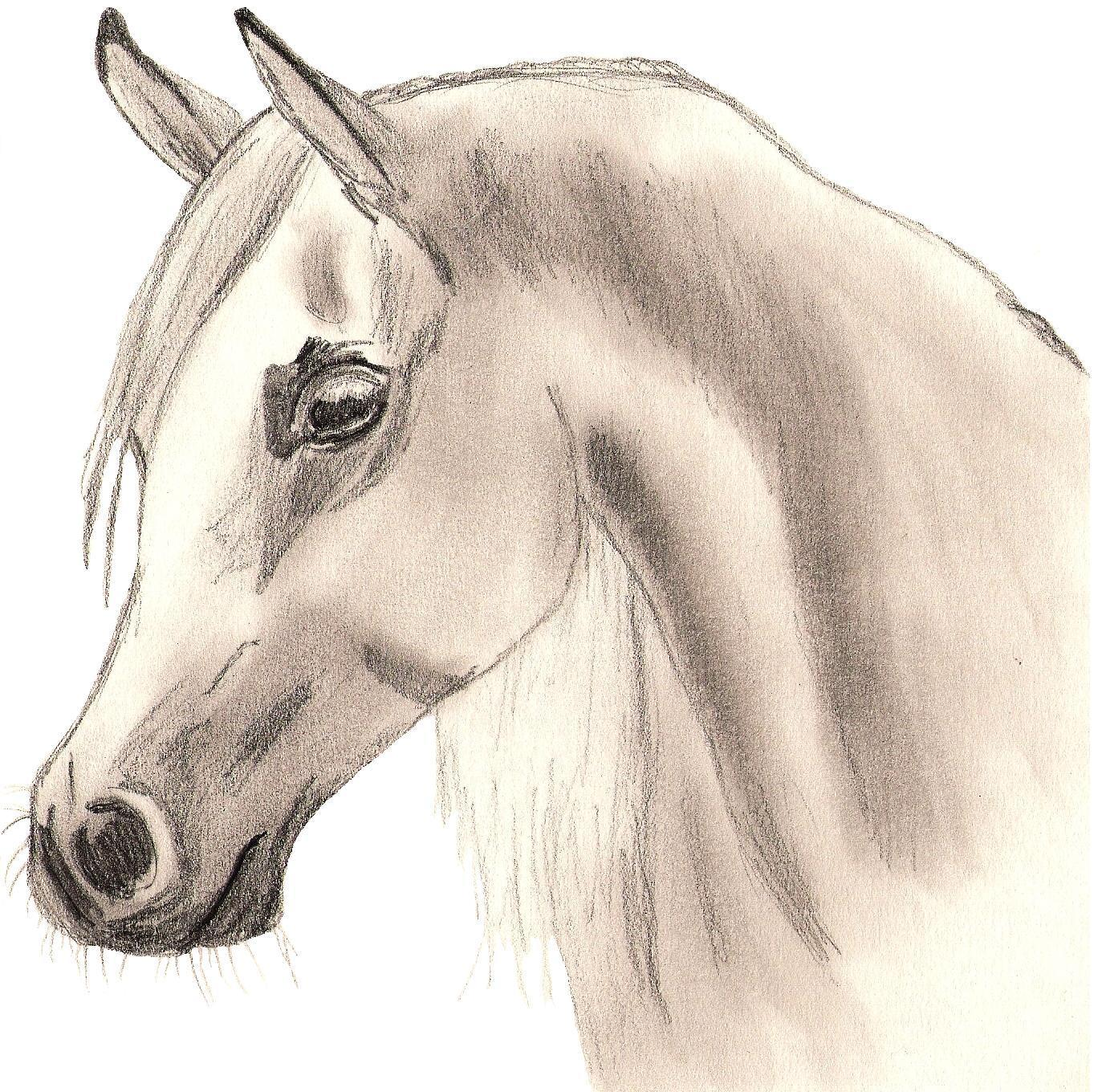 Arabian Horse - Drawing Photo (22114114) - Fanpop