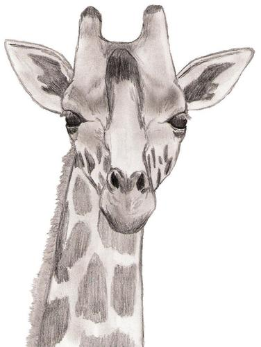 Drawing वॉलपेपर called Baby Giraffe