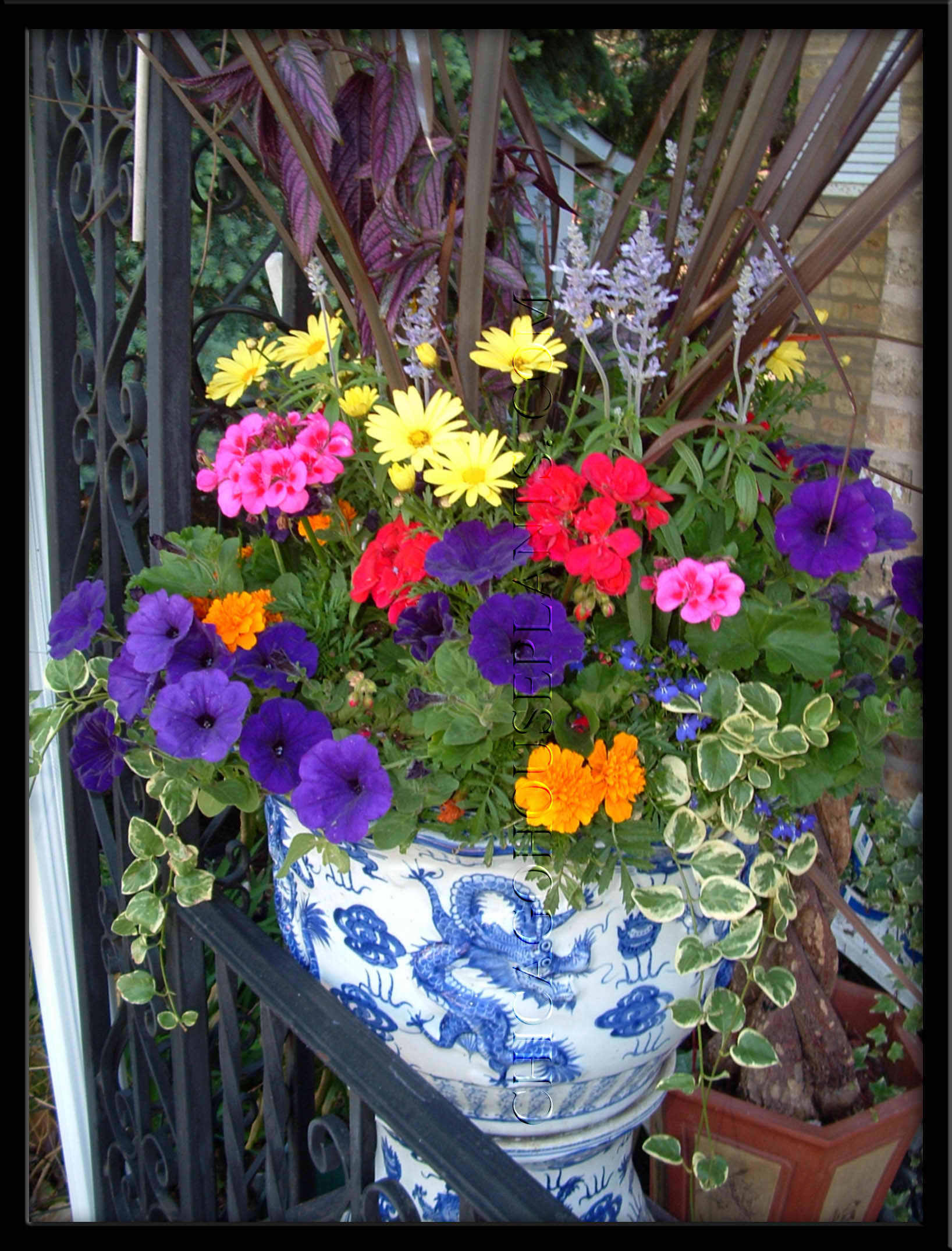 Container gardening images container gardens hd wallpaper and background photos 22146334 - Flowers for container gardening ...