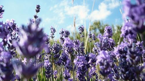 bloem meadow