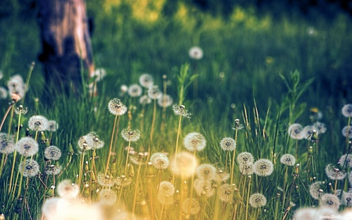 bunga meadow