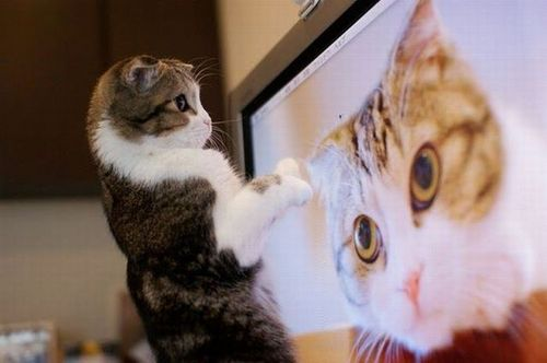 Graphic Humor wallpaper with a tom, a tabby, and a cat titled Fun