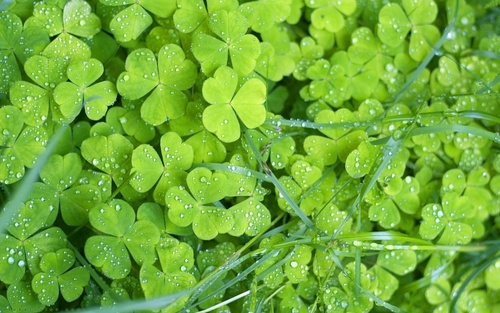 Green wallpaper with common duckweed, a spurge, and duckweed called Green rumput
